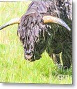 Black Highland Cattle Bull Metal Print