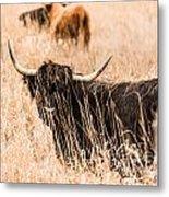 Black Highland Cow Metal Print