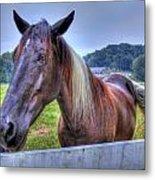 Black Horse At A Fence Metal Print