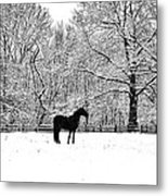 Black Horse In The Snow Metal Print