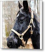 Black Horse Metal Print by Susan Leggett