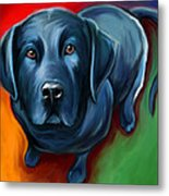 Black Lab Metal Print