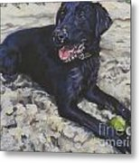 Black Lab On The Beach Metal Print