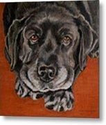 Black Labrador Rests Head Rescue Dog Metal Print