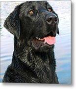 Black Labrador Retriever Dog Smile Metal Print