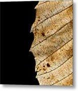 Black Leaf Metal Print