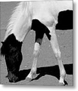 Black N White Horse Metal Print