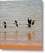 Black-necked Stilt - Lake Powell Metal Print