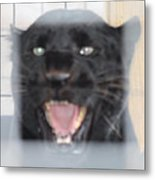 Black Panther Caged And Angry Metal Print