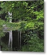 Black Pond And Maple Metal Print by Colleen Williams