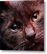 Black Puppy Cat Metal Print