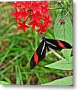 Black Red And White Butterfly Metal Print
