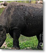 Black Rhino-19 Metal Print