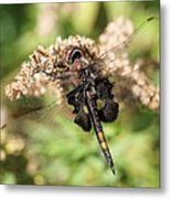 Black Saddlebags Dragonfly At Rest Metal Print