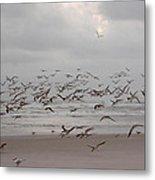 Black Skimmers On The Beach At Dawn Metal Print