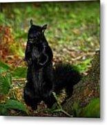Black Squirrel Metal Print
