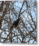 Black  Starling Metal Print