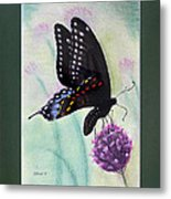 Black Swallowtail Butterfly By George Wood Metal Print