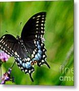 Black Swallowtail Butterfly In Garden Metal Print