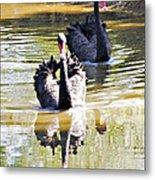 Black Swan 1 Metal Print