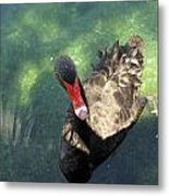 Black Swan 3 Metal Print