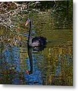 Black Swan 4 Metal Print