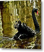 Black Swan Lake Metal Print