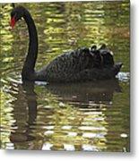 Black Swan Series II Metal Print