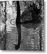 Black Swan Series Iv - Black And White Metal Print