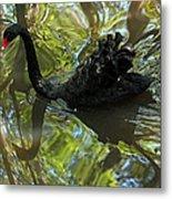 Black Swan Series V  Metal Print