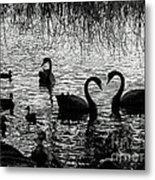 Black Swan Silhouette Metal Print