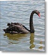Black Swan Square Metal Print