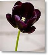 Black Tulip Metal Print