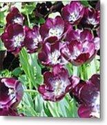 Black Tulips Metal Print