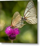 Black-veined White Metal Print