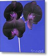 Black Velvet Orchid Metal Print
