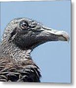 Black Vulture  Metal Print