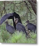 Black Vultures II Metal Print