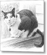 Black White Cat Pencil Portrait Metal Print