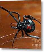 Black Widow Spider Metal Print