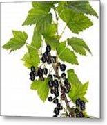 Black Wild Forest Berries Metal Print