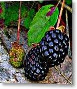 Blackberries Metal Print by Debbie Sikes