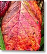 Blackberry Leaf In The Fall 3 Metal Print