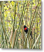 Blackbird In Reeds Metal Print