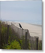 Blackbird On A Fence On The Beach Metal Print by Bill Cannon