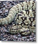 Blacktailed Rattlesnake Metal Print
