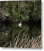Blackwater River Pelican Metal Print