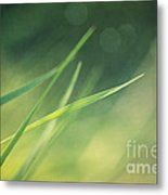 Blades Of Grass Bathing In The Sun Metal Print