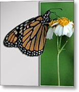 Blank Greeting Card 5 Metal Print
