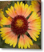 Blanket Flower Metal Print